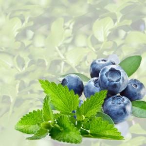 Blaubeere- Mint