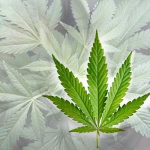 Tabak Cannabis